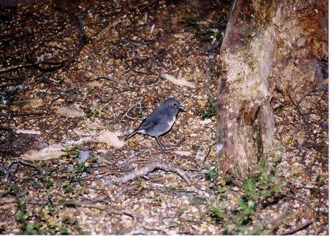 ウルバ島の野鳥